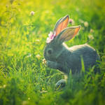 rabbit by StopScreamGraphy