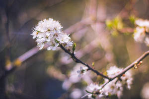 feel spring ^.^~ by StopScreamGraphy