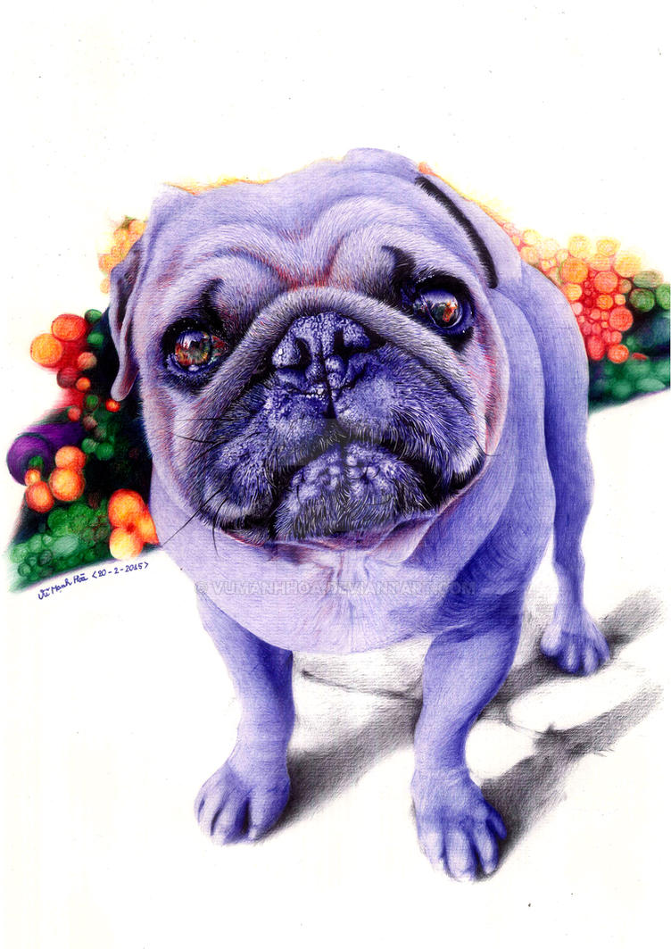 Color Scanning - Pug dog by vumanhhoa