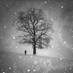 .tree.of.dreams. by candymax
