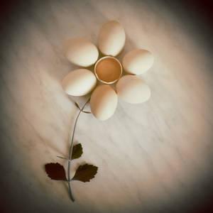 :eggflower: