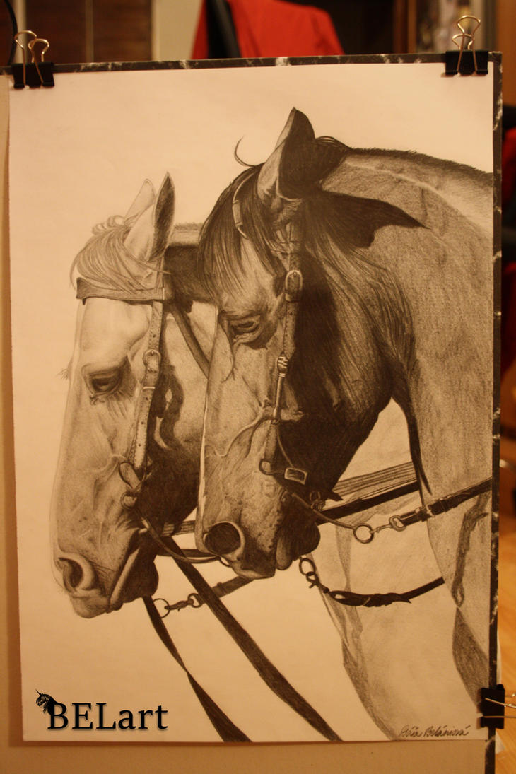 Horses portrait A3 by Bewlyer