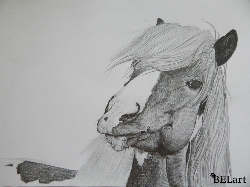 Icelandic horse drawing portrait A4 by Bewlyer