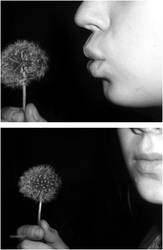 Dandelion by Coralove