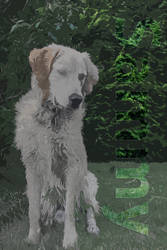 Golden Retriever Sammy original R by Johannes H
