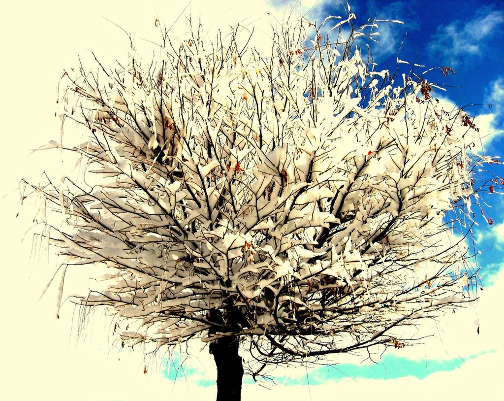 Single Tree by melihsaricam