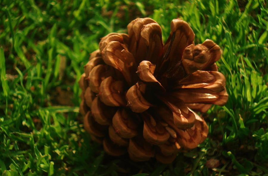 Cone by melihsaricam