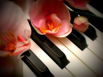 Peaceful music by katara999