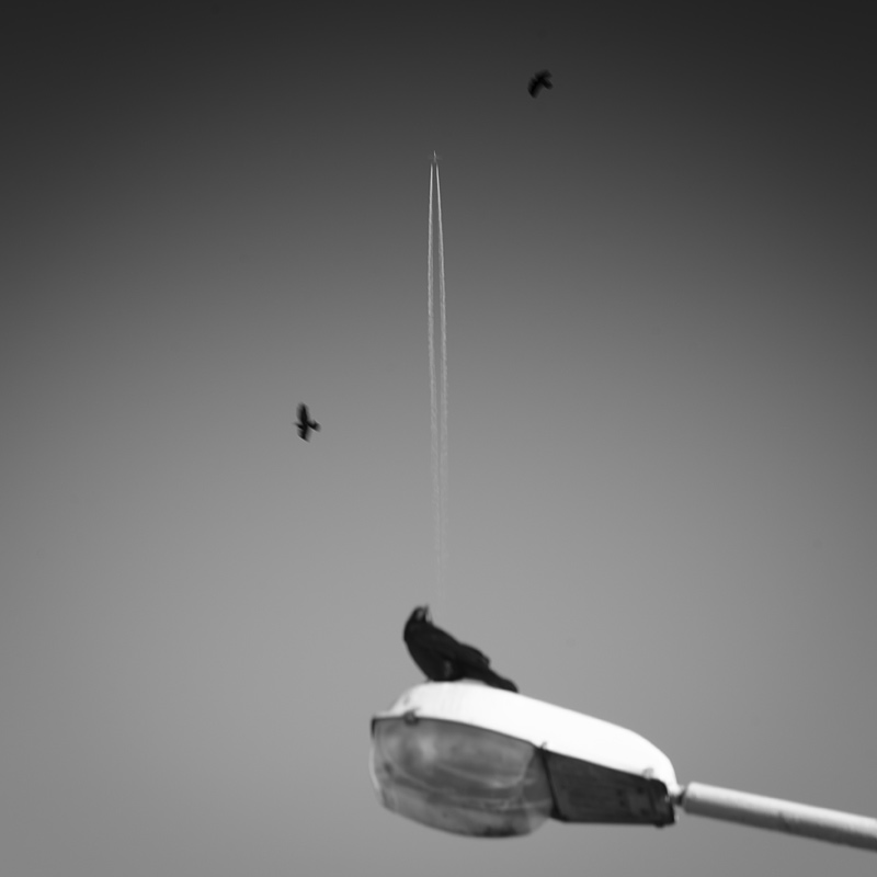 myfly by pivan