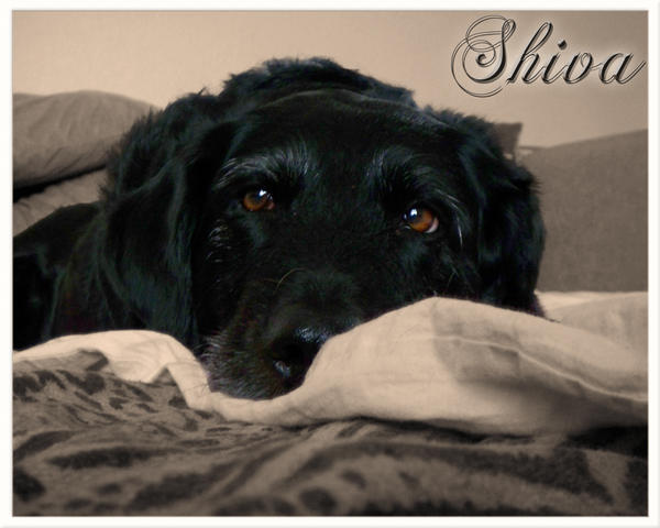 Shiva - My Old Lady by hernerzecke