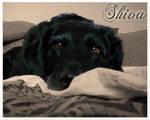 Shiva - My Old Lady