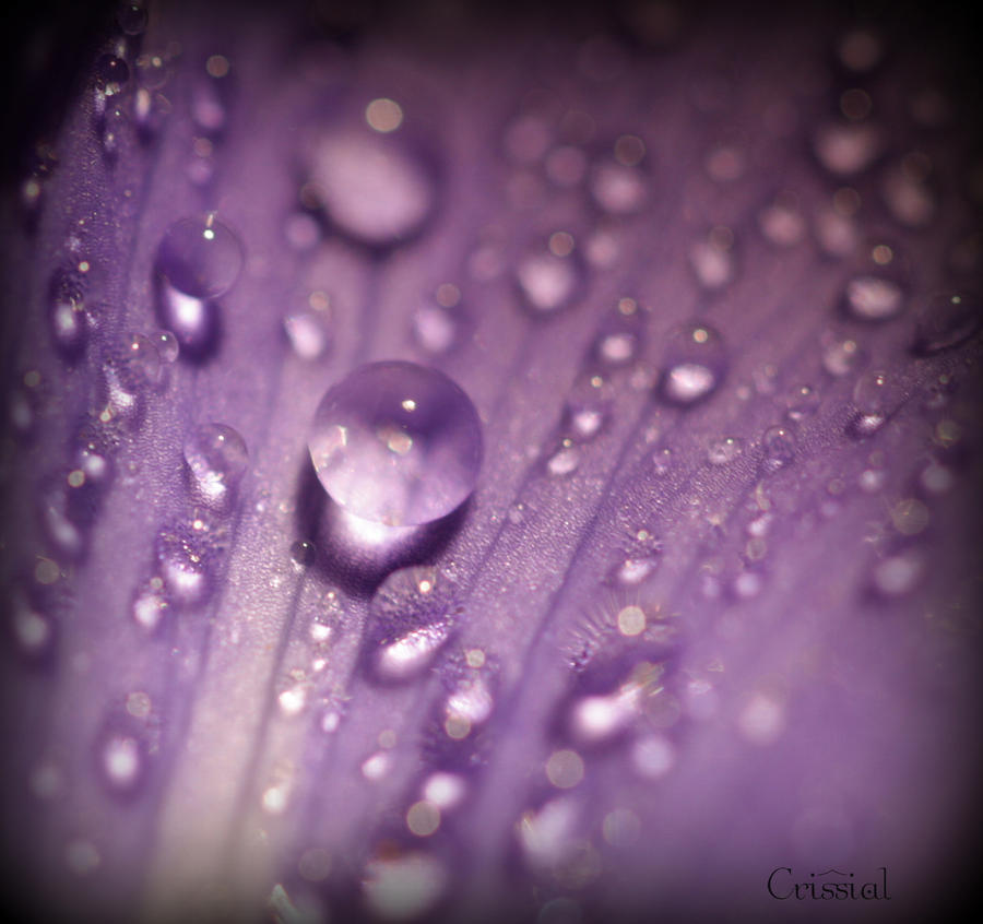 purple rain by crissial