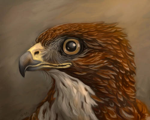 Hawkportrait Wootikas