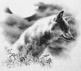 Wolf by MADMANHales