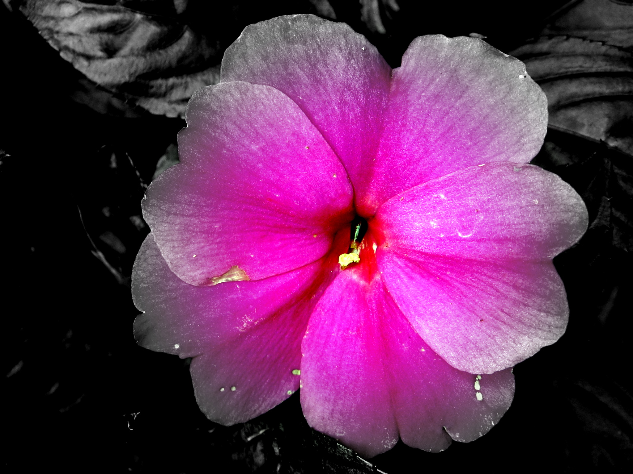 pretty in pink by alexandria-e-p