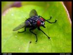 LSArt - Macro Fly 1