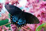 Beautifly by KitKatQT100