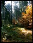 light rays I