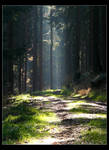 light rays at sunday