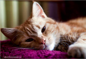 Ginger by Cailleach-Verinen