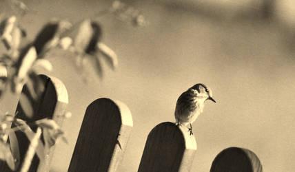 Unknown Bird by bluesgrass