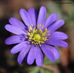 A little flower 2