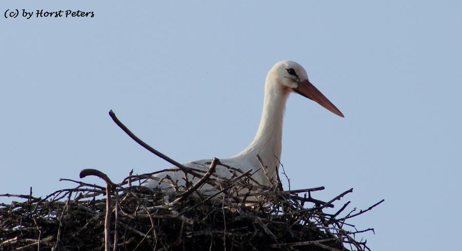 Stork 6 by bluesgrass