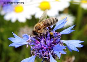 Blumen am Wegesrand 2 by bluesgrass