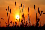 Sunset 35 by bluesgrass