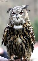 Uhu / Eagle Owl 3 by bluesgrass