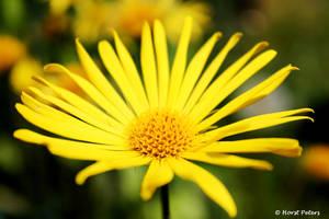 Yellow... by bluesgrass