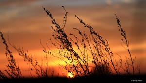 Sunsetimpression 3