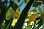 Yellow Stars by bluesgrass