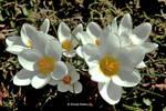 White Lightnin' by bluesgrass