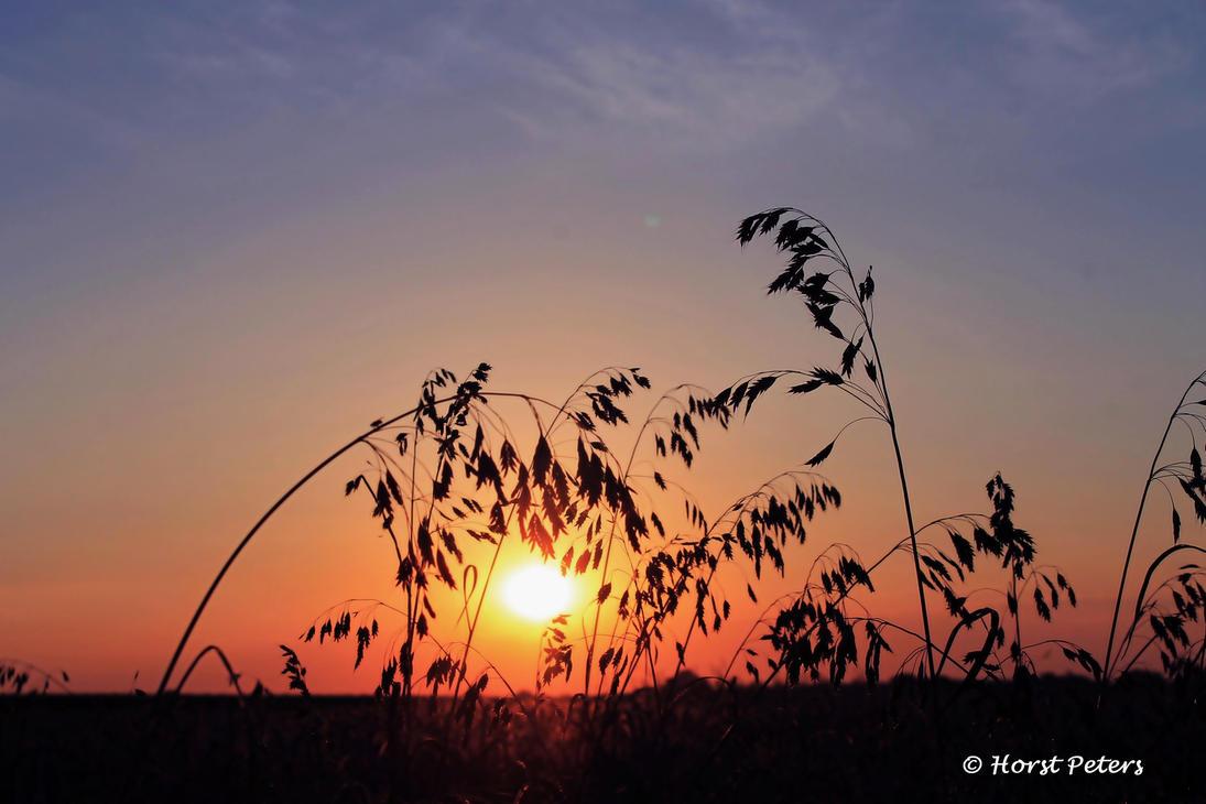Sunrise 11 by bluesgrass