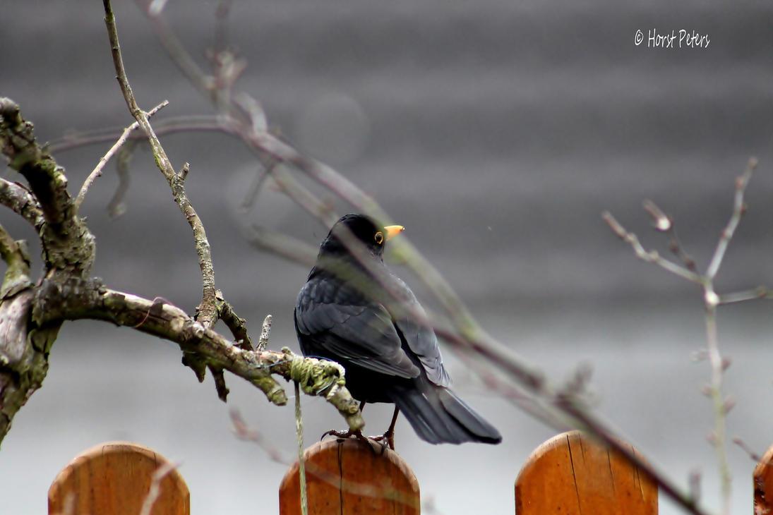 Blackbird 22 by bluesgrass