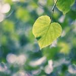 leaf heart by chpsauce