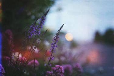 summer evenings by chpsauce