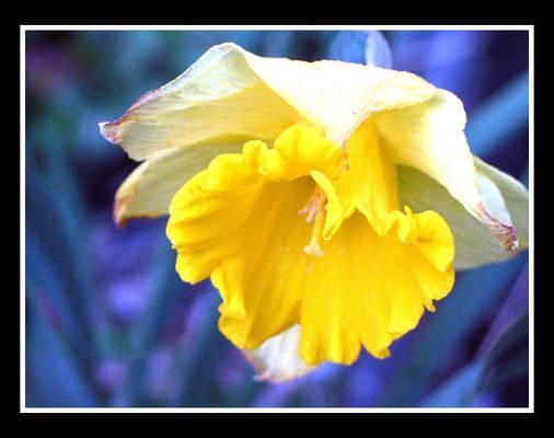 Flowers of blue     so true