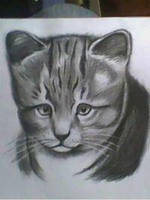 2013 drawing - cutie kitty by nielopena
