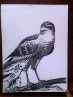 2013 drawing - hawk by nielopena