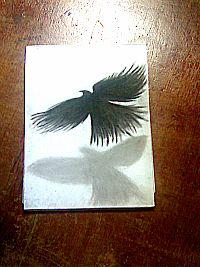 2013 drawing - crow 3d :) by nielopena