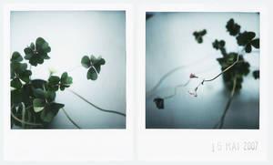 lucky flower by prismopola