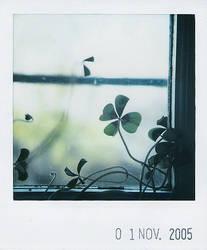 lucky window II by prismopola