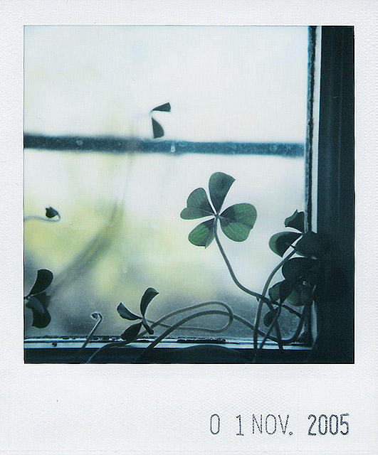 lucky window II by prismopola