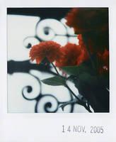 flowers II by prismopola