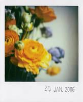 flowers by prismopola