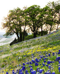 Hills of Texas