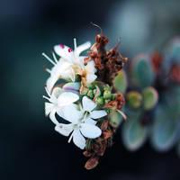 winter flowers. by girlmarvel