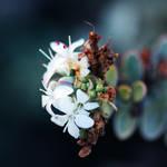 winter flowers.